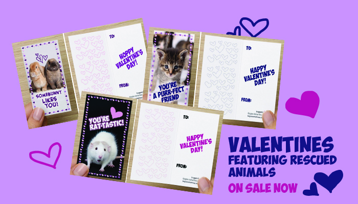 Valentines on sale now