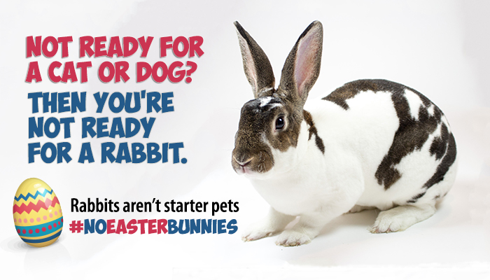 Rabbits need as much care as cats and dogs. No Easter bunnies.