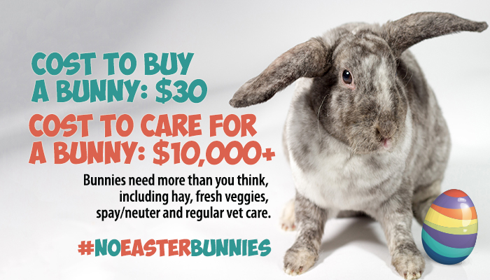 Rabbits are expensive to own. No Easter bunnies