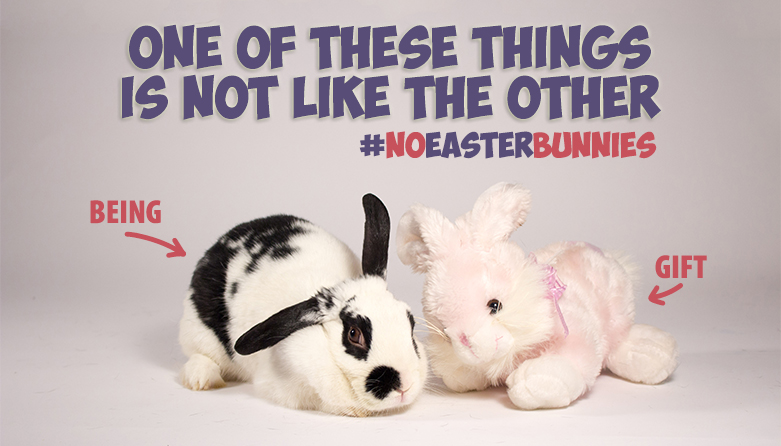 No Bunnies for Easter