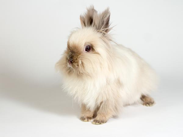 Aspin the rabbit