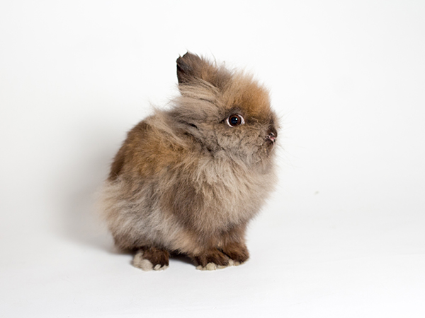 Cadbury the rabbit