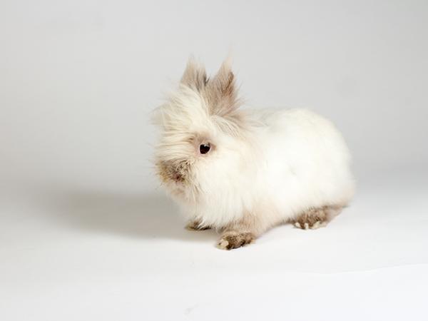 Chewie the rabbit