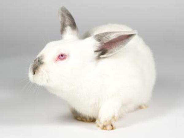 Evan the rabbit.