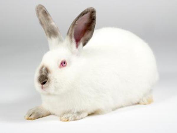 Ivory the rabbit
