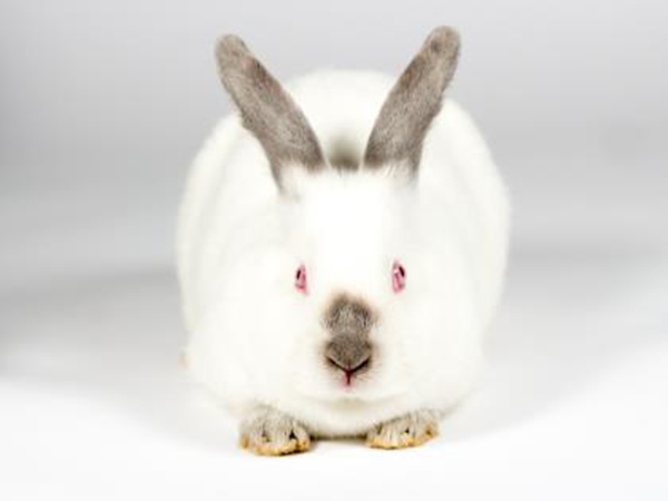 Max the rabbit