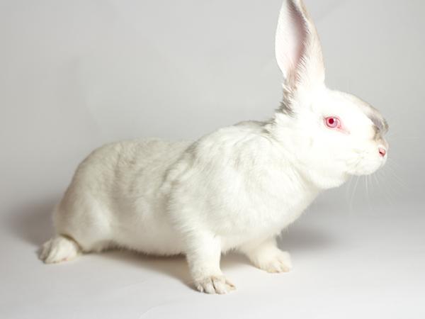Minnie the rabbit