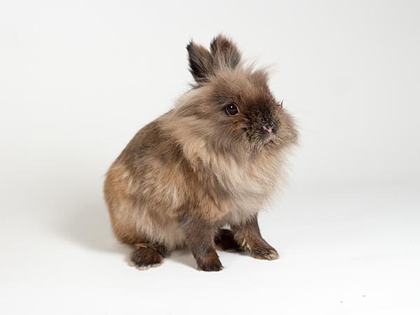 Ophelia the rabbit