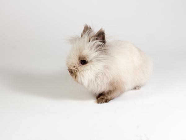 Rigby the rabbit