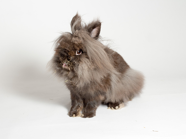 Steve the rabbit