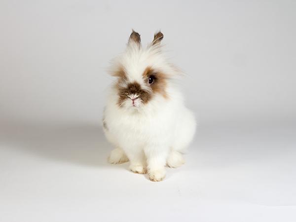 Stuart the rabbit