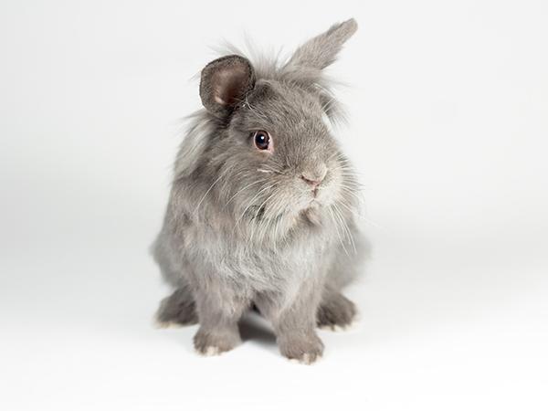 Wispa the rabbit
